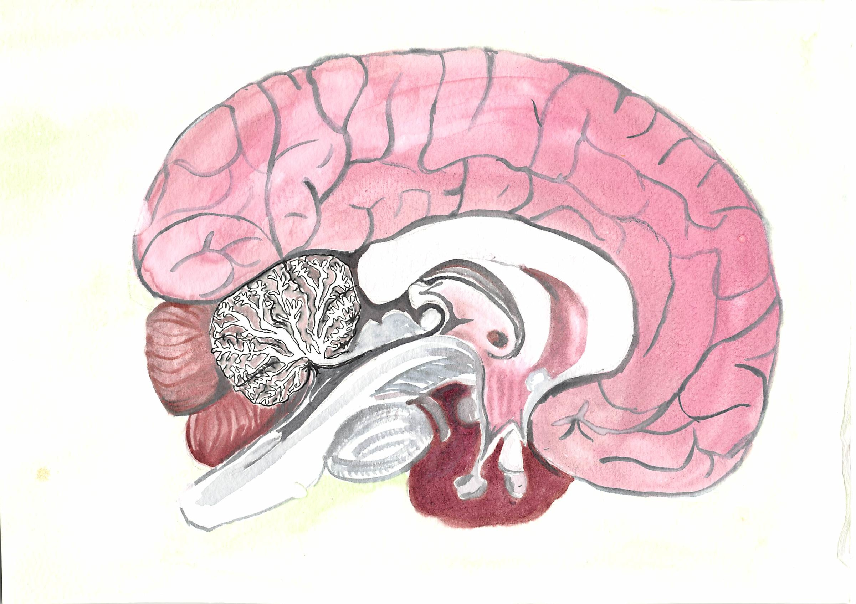 2015-Dana-brain